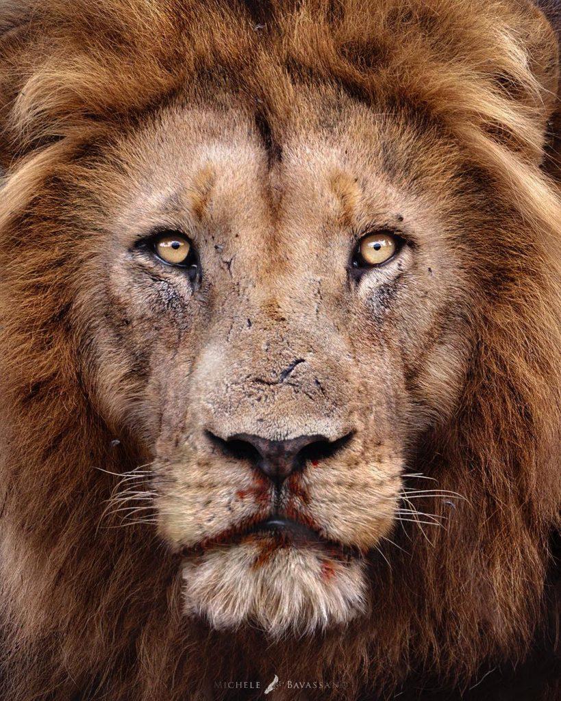 Amazing Wildlife Photos